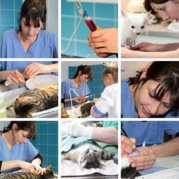 Métier assistante de santé animale