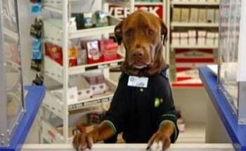 Le métier de conseiller en animalerie