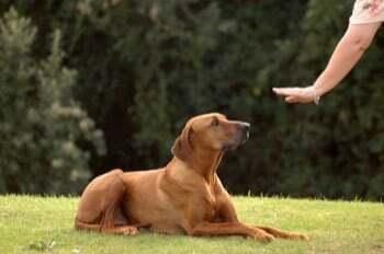 Comment exercer le métier d'éducateur canin
