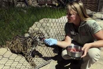 le Métier de soigneur animalier au quotidien