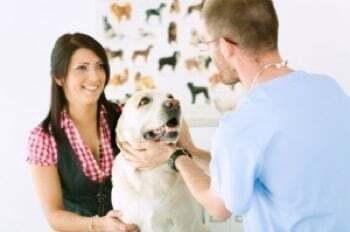 Métier assistante veterinaire et animaliere