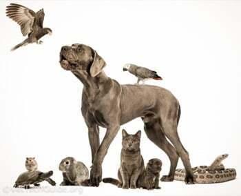 Les formations animalières existantes