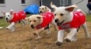 Fonctionnement de la formation bac pro elevage canin