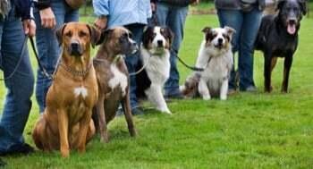 Formation au BP éducateur canin