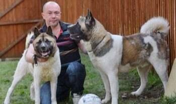 Formation pour devenir eleveur canin correspondance