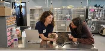 Métiers animaliers Certificats pour travailler